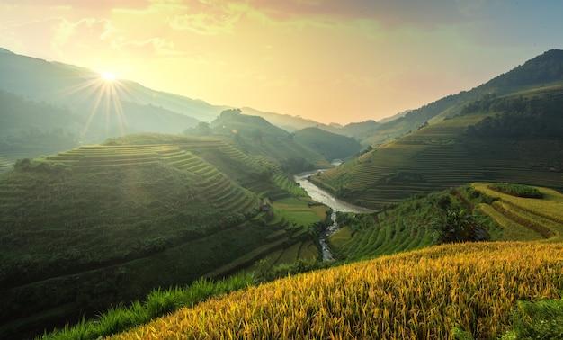 Vietnã os campos de arroz preparam a colheita no noroeste do vietnã. paisagens do vietnã.