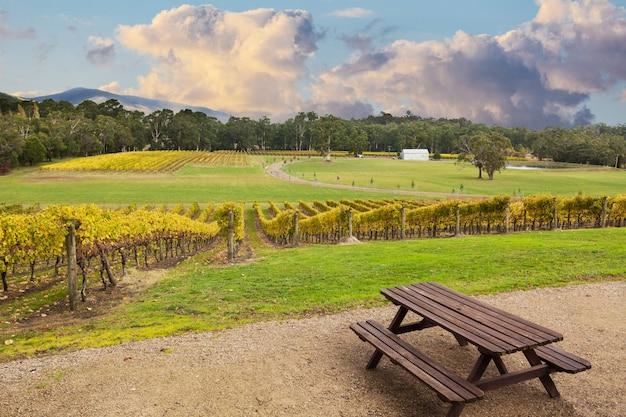 Vinha de beauriful no vale de yarra, austrália no outono