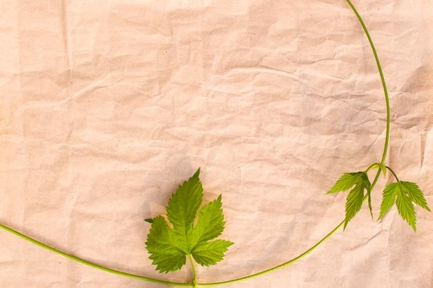 Vinha selvagem em papel amassado