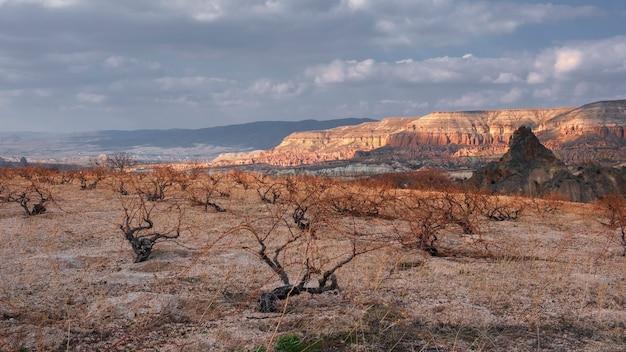 Vinhas ao fundo canyon e rochas no vale vermelho da capadócia, na turquia
