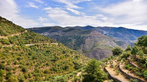 Vinhas nas montanhas de portugal no verão