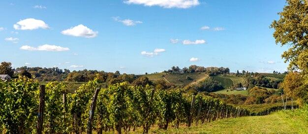 Vinhedo do vinho jurancon nos pirinéus franceses