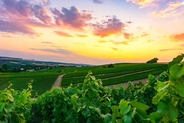 Vinhedos de champanhe bela paisagem na frança