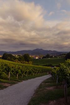 Vinhedos em hondarribia, país basco.