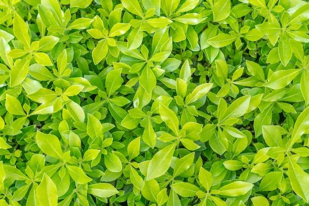 Vinheta de fundo de grama verde ou textura natural das paredes ideal para uso no design de forma justa.