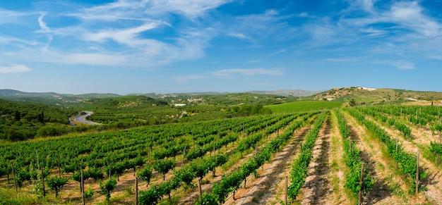 Vinícola com fileiras de uvas na grécia