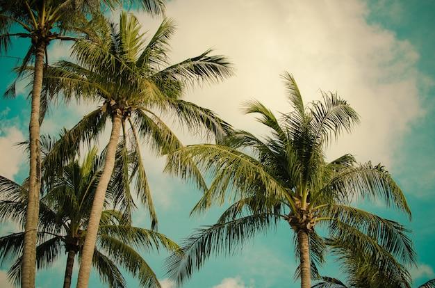 Vintage de árvore de coco