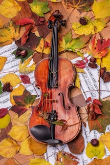Violino e folhas de outono