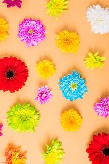 Visão aérea de flores coloridas em fundo amarelo