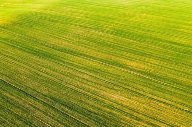 Visão aérea de um campo verde. campanha de semeadura na bielorrússia
