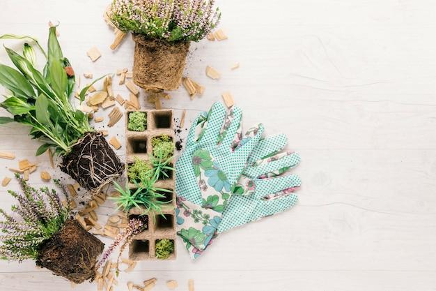 Visão aérea do solo; bandeja de planta e turfa com luva de jardinagem na superfície de madeira branca