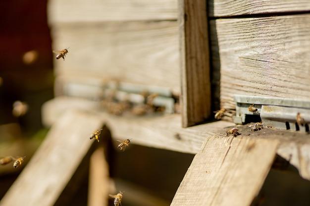 Visão aproximada das abelhas trabalhando trazendo pólen de flores para a colmeia