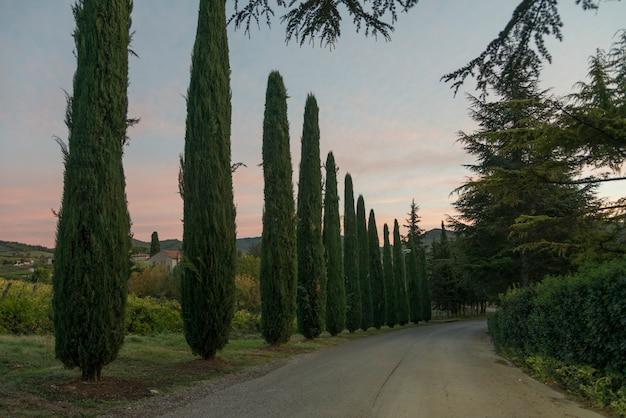 Visão cênica, de, árvores, ao longo, estrada rural, tuscany, itália