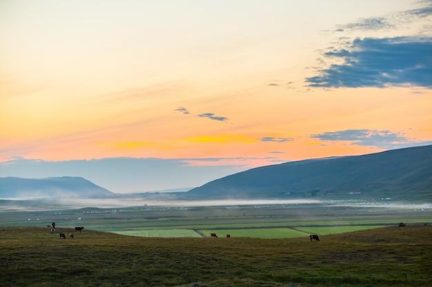 Visão cênica, de, manhã, em, fazenda agrícola, em, islândia, norte, islândia