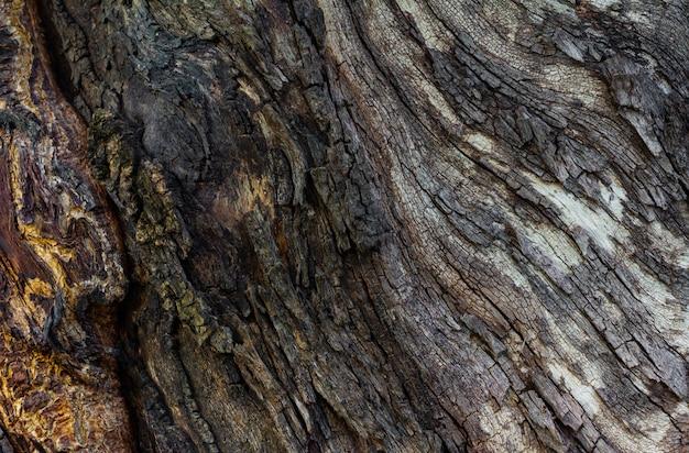 Visão close-up, de, casca de árvore