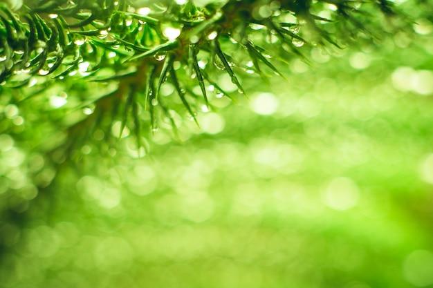 Visão da natureza da folha verde no fundo de vegetação turva