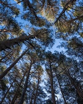 Visão de baixo ângulo de árvores sob a luz do sol e um céu azul durante o dia