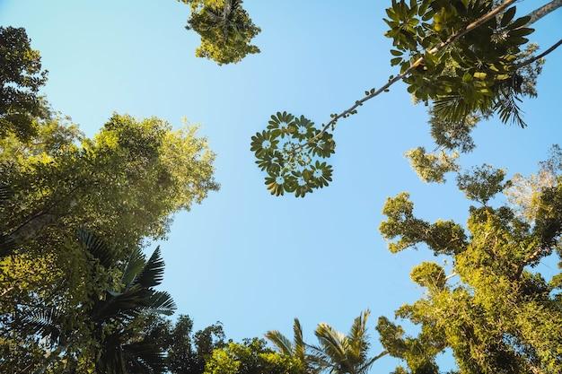Visão de baixo ângulo de folhas em galhos de árvores em um jardim sob a luz do sol