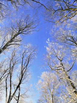 Visão de baixo ângulo de galhos de árvores cobertos de neve sob o céu azul em larvik, na noruega