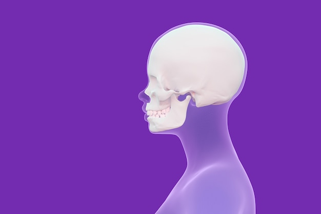 Visão do crânio na cabeça humana