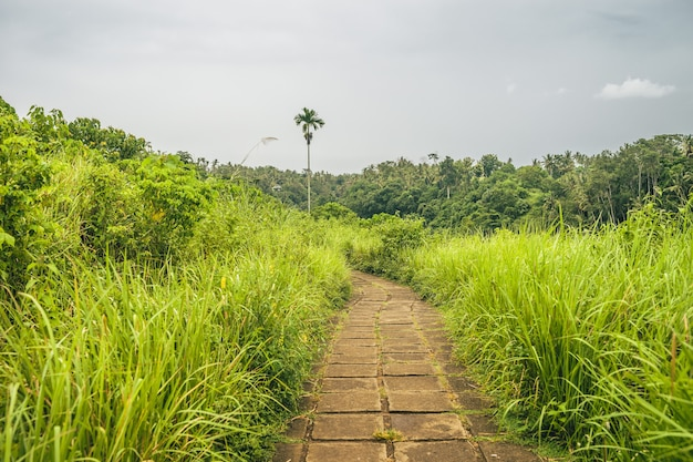 Visão geral de um caminho forrado de grama com uma bela vista de uma floresta de montanha em um dia nublado