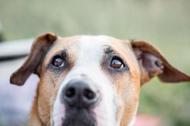 Visão macro dos olhos do cão ao ar livre em condições naturais, profundidade de campo