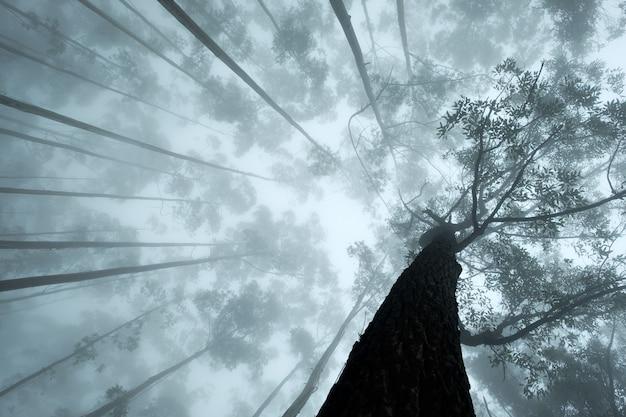 Visão na coroa de árvores tropicais