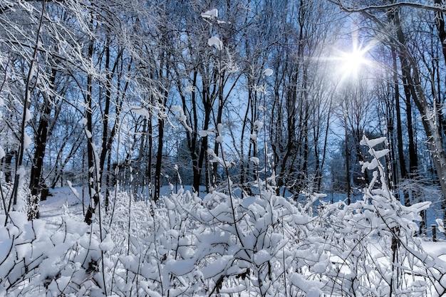 Visão noturna de árvores cobertas de neve em um parque da cidade. a luz forte da lanterna. queda de neve. conto de fadas da floresta antes do ano novo.