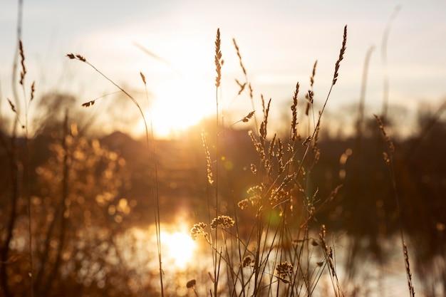Visão pacífica da luz da manhã