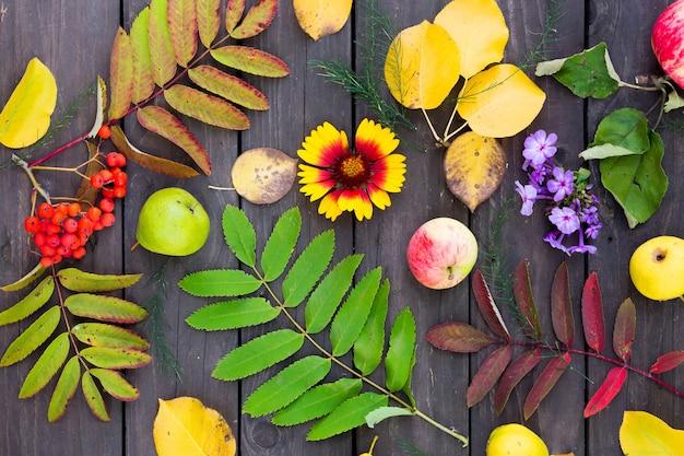 Visão plana leiga de folhas de outono, bagas de rowan, frutas e flores na mesa do jardim
