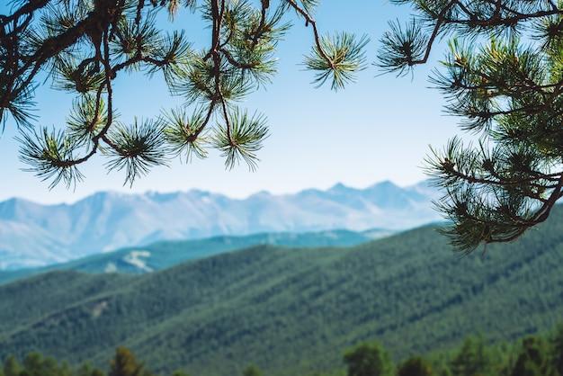 Visão turva de montanhas gigantes através de galhos de coníferas