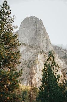 Visão vertical de árvores altas e montanhas rochosas com um céu cinza ao fundo