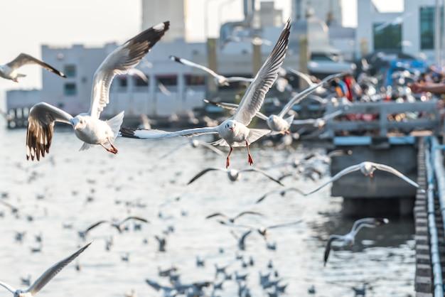 Visitantes alimentando milhares de gaivotas