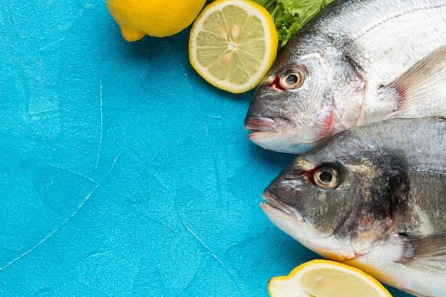 Vista acima dos peixes no fundo azul