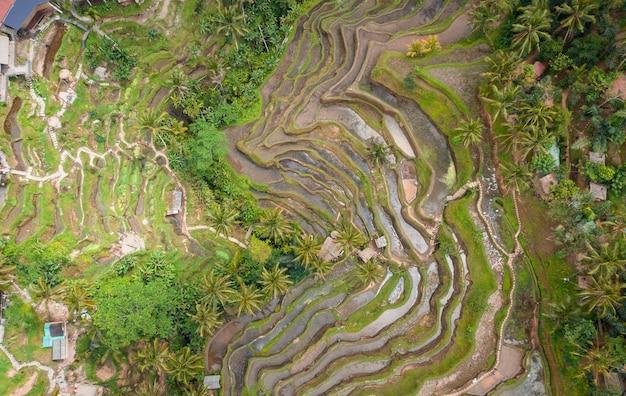 Vista aérea aérea do terraço do arroz de tegallalang. ubud bali - indonésia