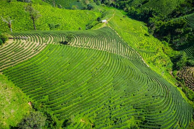 Vista aérea área agrícola