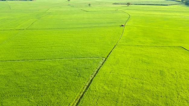 Vista aérea campos de arroz pela manhã, tailândia