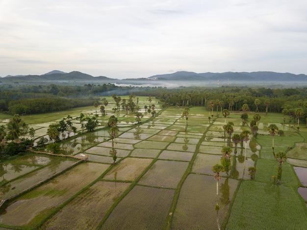 Vista aérea campos recém plantados