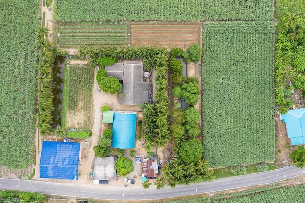 Vista aérea, casa e fazenda com coco, cana-de-açúcar e lago com estrada asfaltada em zona rural