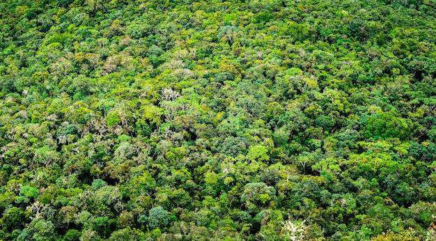 Vista aérea da ampla floresta verde