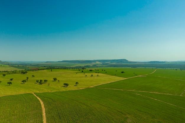 Vista aérea da área de plantação de cana-de-açúcar com montanhas