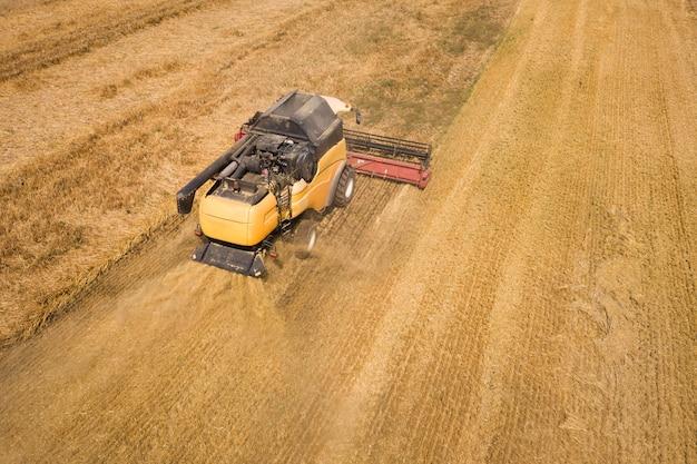 Vista aérea da colheitadeira colhendo um grande campo de trigo maduro. agricultura do ponto de vista do zangão.