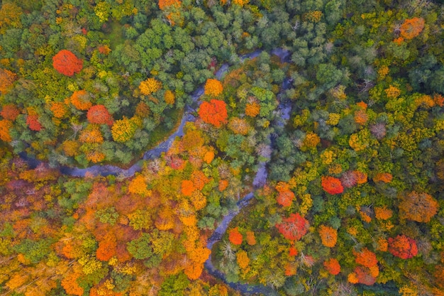 Vista aérea da copa colorida das árvores, lituânia, outono