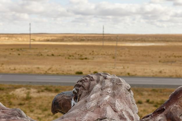Vista aérea da estepe, cabeça de águia, vista da parte de trás do pescoço e da cabeça
