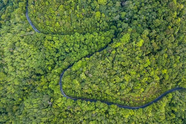 Vista aérea da estrada através da floresta.
