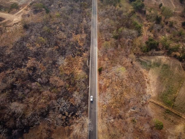 Vista aérea da estrada através da floresta