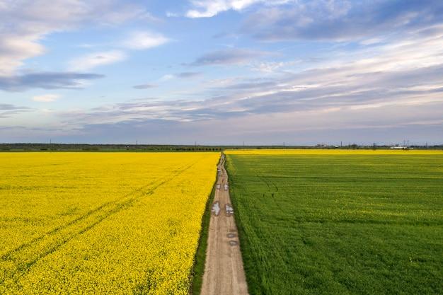 Vista aérea da estrada de terra reta com poças de chuva em campos verdes com plantas de colza florescendo no céu azul