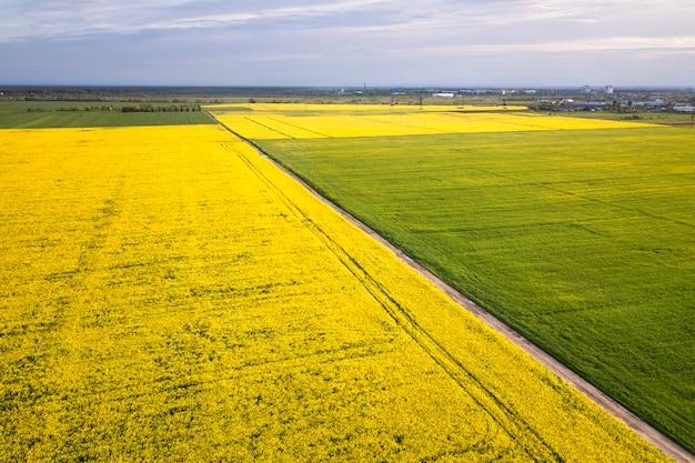 Vista aérea da estrada de terra reta em campos verdes e amarelos com plantas de colza florescendo na primavera ensolarada ou dia de verão. fotografia de zangão.