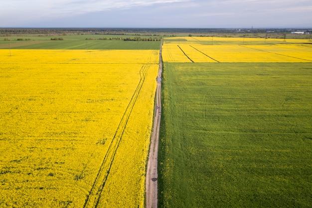 Vista aérea da estrada de terra reta em campos verdes e amarelos com plantas de colza florescendo na primavera ensolarada ou dia de verão.