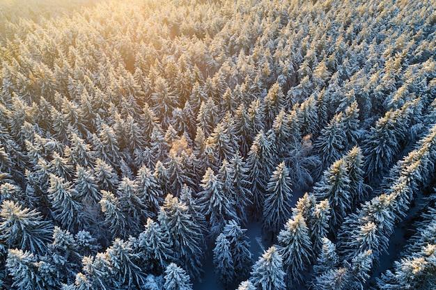 Vista aérea da floresta de abetos cobertos de neve